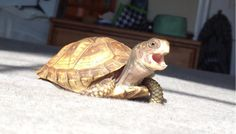 19 Turtles (And Tortoises!) You Can't Believe Even Exist