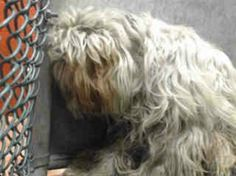 Downey pound pooch beyond terrified and depressed: Rescue needed