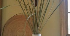 """Cattails are beautiful accents for Autumn arrangements both indoors and out. To keep them from turning to """"fluff"""" on a stick you can use a variety of techniques…"""