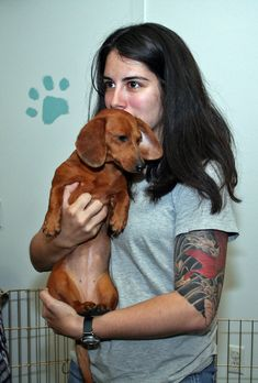 15 Things you didn t know about dachshunds.impt tend to be jumpers & when being carried, tend to jump & can hurt themselves.Hold them correctly as shown. dogs and puppies Puppies And Kitties, Cute Puppies, Cute Dogs, Doggies, Animals And Pets, Cute Animals, Dachshund Love, Daschund, Weenie Dogs
