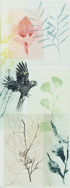 Trudy Rice Enigma Hakea & Landing Black Cockatoo, 2016 Solar plate etching Unique State