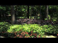 Garvan Woodland Gardens   Exploring Arkansas (AETN). One Of The Top 5  Botanical