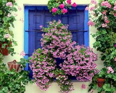 You won't have seen a city with as many flowers as this before. Cordoba in Spain is just lovely! Window Box Flowers, Flower Boxes, Flower Containers, Window Boxes, Beautiful Gardens, Beautiful Flowers, Simply Beautiful, Cordoba Andalucia, Cordoba Spain