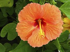 Hummingbirds and butterflies will thank you for planting Hibiscus.   13 Colorful Plants That'll Make Any Garden Pop