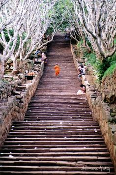 An apprentice monk makes his way up the 1840 steps, bordered with frangipane trees, leading to Mihintale. Mihintale is a mountain peak near Anuradhapura in Sri Lanka. It is believed by Sri Lankans to be the site of a meeting between the Buddhist monk Mahinda and King Devanampiyatissa which inaugurated the presence of Buddhism in Sri Lanka.