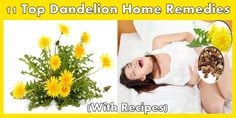 Dandelion Is Not Just A Weed, It Is More Than A Medicine!!