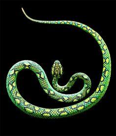 Photos of Snakes