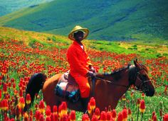Pony trekking in the Drakenberg Mountains, Lesotho South Afrika, Kwazulu Natal, The Beautiful Country, Am Meer, Wild Nature, Tanzania, Kenya, Countries Of The World, Continents