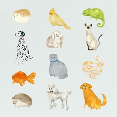 Friendly animals painting collection template | premium image by rawpixel.com / nunny Friends Illustration, Dog Illustration, Animal Paintings, Animal Drawings, Photo Banner, Free Illustrations, Cute Cartoon, Watercolor Art, Vector Free