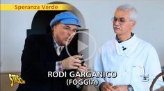 Le carrube del Gargano a «Striscia la notizia» (video) - http://blog.rodigarganico.info/2016/gargano/le-carrube-del-gargano-striscia-la-notizia-video/