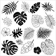 Flower Drawing Discover Isolated silhouettes of tropical palm leaves jungle leaves. Isolated silhouettes of tropical palm leaves jungle leaves. Vector set of hand drawn llustrations on white background. Watercolor Clipart, Watercolor Paintings, Leaf Drawing, Leaves Vector, Tropical Leaves, Free Vector Art, Doodle Art, Doodle Frames, Line Art