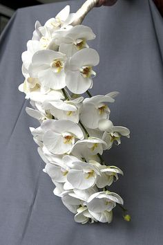 Wedding Florals: Cascading Bouquet in white Orchid!