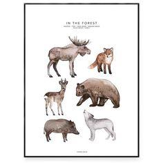 Ljuvlig poster till barnrummet med fem skogsdjur. Motivet är målat med akvarell. På motivet syns en älg, en räv, ett rådjur, en björn, ett vildsvin och en varg.