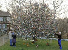 Apple tree decorated with thousands of Easter eggs in Saalfeld ...