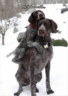 funny dog pictures: cold winter