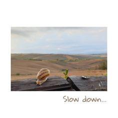 """""""Danken wir deiner Langsamkeit, Schnecke, denn wärst du schnell wie ein Kaninchen oder könntest dich so geschwind fortbewegen wie eine Schlange, wärst du uns nicht begegnet und hättest uns nicht warnen können"""" sagte die Ameise. Aus: Der langsame Weg zum Glück, Lius Sepúlveda Mountains, Instagram, Nature, Travel, Snail, Give Thanks, Bunnies, Naturaleza, Viajes"""