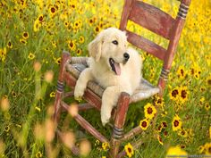 Pictures of spring time   Free desktop backgrounds with Spring, Animals, wallpapers - 352234