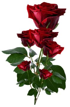 Red Roses PNG Clipart
