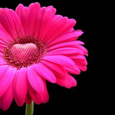 Google Image Result for http://www.djibnet.com/photo/384323992-happy-valentines-day-pink-gerbera-with-a-heart-of-chocolate.jpg