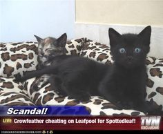 Scandal! - Crowfeather cheating on Leafpool for Spottedleaf!