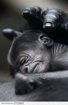 """watching your child sleep and feeling the need to """"touch the piece of peace"""" that you see in them. It's universal."""