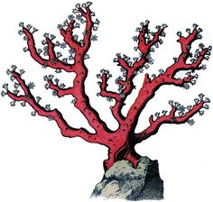 Fabulous Vintage Red Coral Image! - The Graphics Fairy