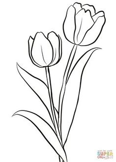Two Tulips coloring page from Tulip category. Select from 28148 printable crafts. - Two Tulips coloring page from Tulip category. Select from 28148 printable crafts of cartoons, natur - Tulip Drawing, Tulip Painting, Fabric Painting, Hand Embroidery Patterns Free, Embroidery Flowers Pattern, Paper Embroidery, Printable Flower Coloring Pages, Coloring Pages Of Flowers, Easy Coloring Pages