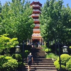 The Nan Tien Temple is a cultural and architectural hub located in Berkeley near Wollongong. You can explore the grounds and learn about the Buddhist faith and if you want to have the full experience, you can even stay the night on the Temple's grounds. Australia Day, Australia Travel, One Day Trip, Day Trips, Lodge Look, Air Balloon Rides, Rock Pools, Buddhist Temple, Stay The Night