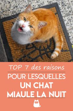 Son Chat, Aristocats, Aquarium, Prince, Education, Dog Cat, Adorable Kittens, Cats And Kittens, Funny Cats