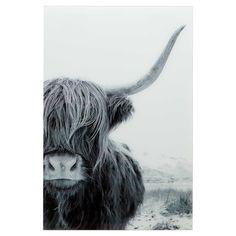 Buffalo, Cow, Animals, Bohemian, Animales, Animaux, Animal, Animais, Boho