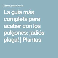 La guía más completa para acabar con los pulgones: ¡adiós plaga! | Plantas