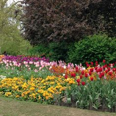 #springcolour with #tulips