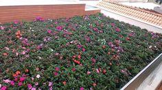Conheça a mais nova tecnologia em telhados verdes. Entre as vantagens se destacam a irrigação automatizada e o peso que chega a ser 75% mais leve que os demais telhados verdes  FAÇA JÁ UM ORÇAMENTO. 998135472 contato@vitoriagreen.com.br by vitoriagreen_paisagismo http://ift.tt/1V9qltb