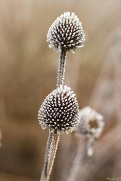 - Feldkirchen Secret Power, Plant Fungus, Fungi, Dandelion, Flowers, Plants, Mushrooms, Flora, Royal Icing Flowers