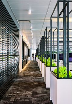 industrial plant walls that can grow over time by desks.