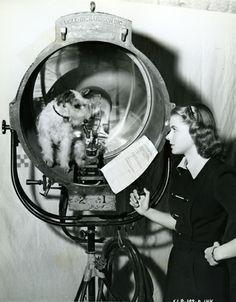 0 Ingrid Bergman talks to her dog Buzzy on the set of Intermezzo