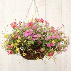 Pretty Pinks and yellows    All you need to make this hanging basket is your basket : )  And the following flowers;  A = 2 Calibrachoa   B = 2 Bidens   C = 2 Verbena