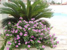Foto de Pousada Canto Da Ilha em  Ilha Comprida/SP: Plants, Island, Pictures, Plant, Planets
