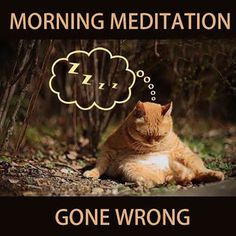 DownDog Funnies: Morning Meditation, Gone Wrong...From the Downdog Diary Yoga Blog found exclusively at DownDog Boutique.