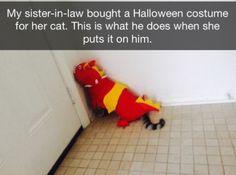 Cats, please calm down.