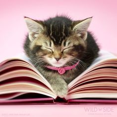 Cat & book  /  Photo by Wild Side Photography :)