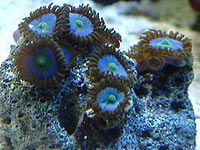 Pictures for salt water aquarium inhabitants