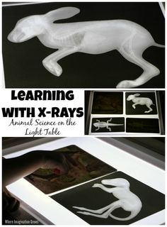Learning with X-Rays! Preschool Animal Science on the Light Table