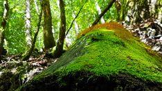 Top Ausflug: Auf dem Holzweg ins Mendlingtal | Wiederunterwegs.com Trunks, Plants, Hiking, Summer, Timber Wood, Drift Wood, Tree Trunks, Plant, Planets