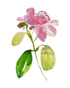 Tropical beauty - Watercolor art, island chic, coastal chic, art print, Hawaiian flower, tropical art,watercolor painting, minimalist, pink