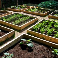 Raised bed image
