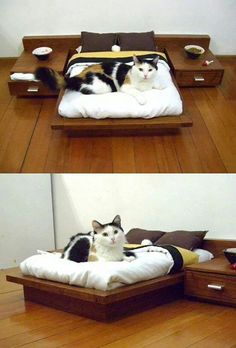Awesome Cat Furniture Design Ideas For Crazy Cat People. Cool Cats, I Love Cats, Crazy Cats, Cool Cat Beds, Pet Beds, Dog Bed, Beds For Cats, Cat Room, Pet Furniture