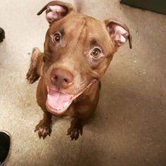 WHAT A BEAUTIFUL GIRL...Layla - URGENT - Dekalb County Animal Shelter in Decatur, Georgia - ADOPT OR…