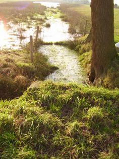 ven in grasland aan de geheulse dijk