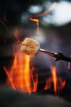 toasting mashmellows over a campfire
